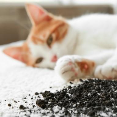 Jak wyprać dywan? Domowe i profesjonalne sposoby.