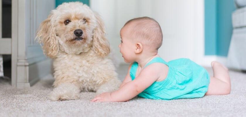 pies i dziecko na wykladzinie