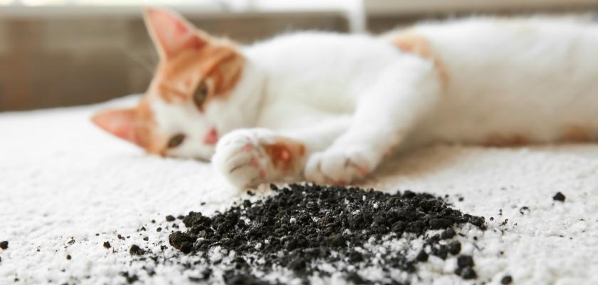 kot na brudnym dywanie